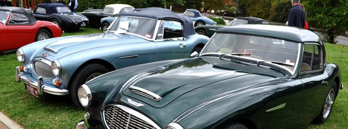Image of three Austin Healey cars